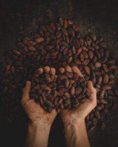 kakao, kakaowiec, ziarna kakaowca, kakao właściwości, ile kalorii ma kakao, kakao na diecie