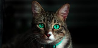 Jak odstraszyć koty?