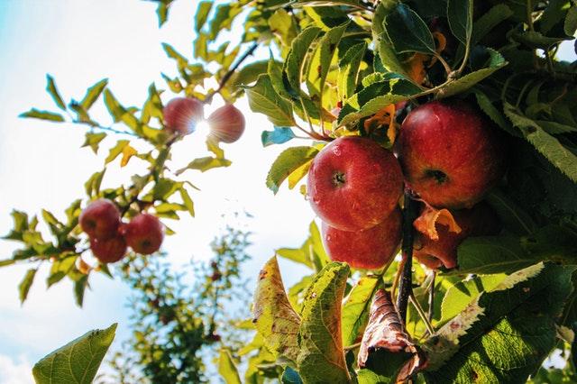 Jak pić ocet jabłkowy?